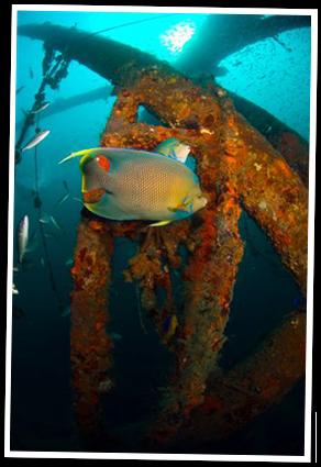 Dive Sites   Dive Locker - Panama City Beach Florida Dive ...